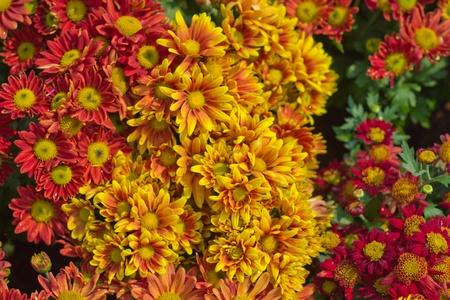Vibrant field of flowers Stock Photo