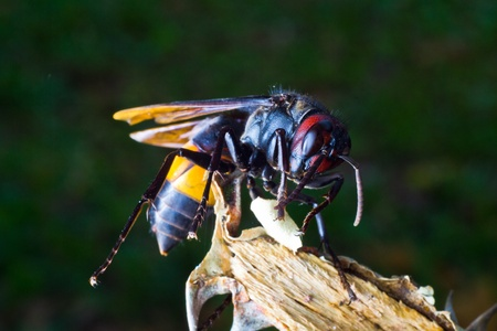 paper wasp: Paper wasp Stock Photo