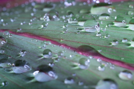 leaf with rain drops