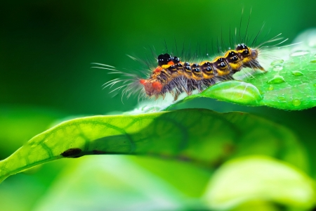 Closeup Caterpillar on a green leaf