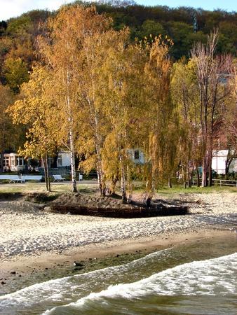 Birch near the sea photo