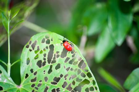 공기 찌꺼기 잎 딱정벌레 스톡 콘텐츠