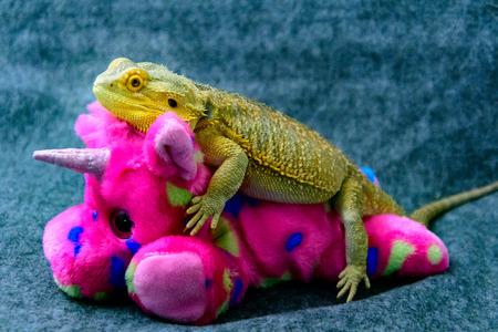 Bearded Dragon riding a stuffed Unicorn