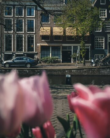 Amsterdam canal with tulips in front Reklamní fotografie