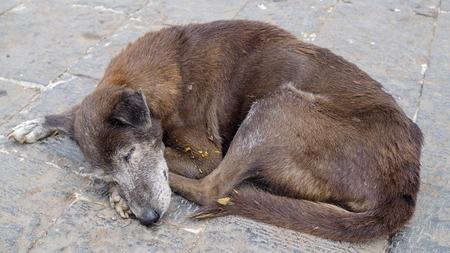 Homeless dog sleeping on the street. Stock Photo