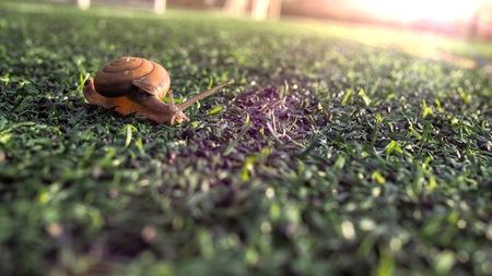 Closeup of beautiful snail walking.