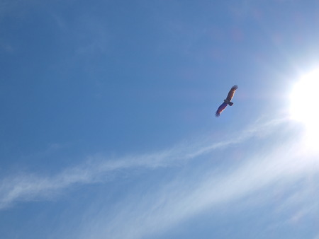 Flying Eagle and sunlight on the blue sky. photo