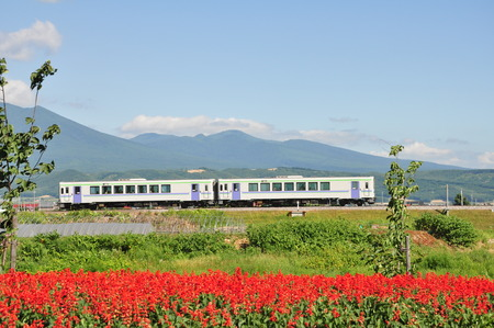 The train on the railroad and the flowers in front of the mountain. Stok Fotoğraf