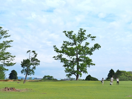 Big tree and many people on the green field with blue sky at Nara park in Nara Prefecture, Kansai, Japan.