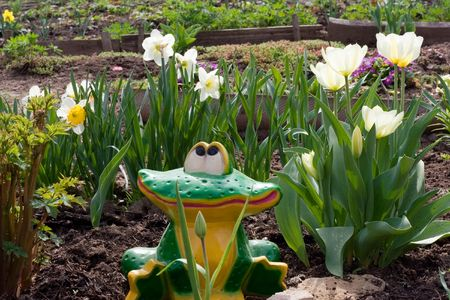Frog in vegetable garden sits amongst colour and smiles Stock Photo - 4321858