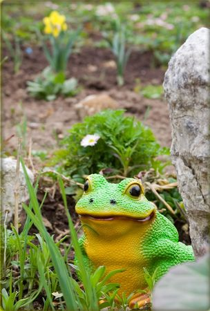 Frog sits in garden amongst colour and stone Stock Photo - 4321843