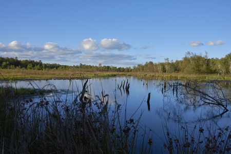 A lake in the Moor Wittmor. in the lake are dead trees