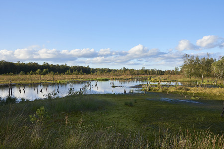 Swamp area in the evening sun in the nature reserve Wittmoor. Europe, Hamburg, Duvenstedt Stock Photo