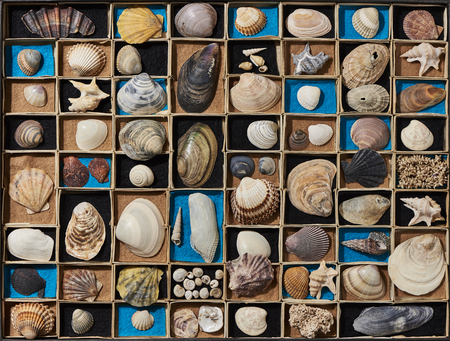 A collection of different seashells in a box. The box is divided into many small subjects Stok Fotoğraf