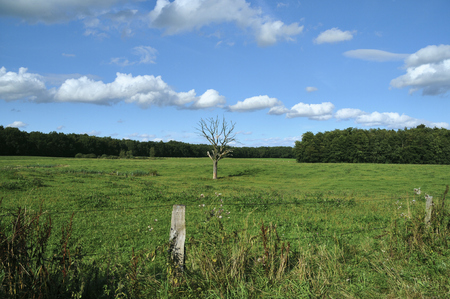 A meadow with a dead tree and blue sky with white clouds at the nature reserve Duvenstedter Brook in Hamburg