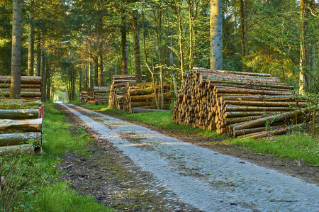 An old road through the Wohldorfer forest in Hamburg. Along the road, logs are stacked. The sun is shining through the treetops. Banco de Imagens