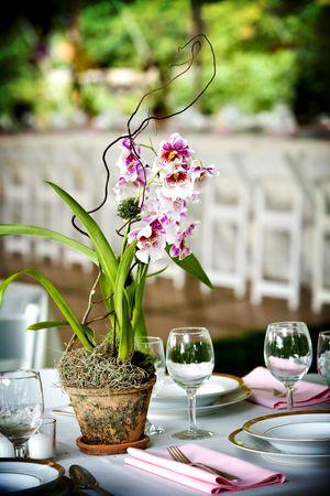 결혼식에서 훌륭한 식사를위한 테이블 세트 스톡 콘텐츠