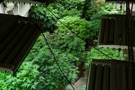 Indoor Zuchtraum von oben Standard-Bild