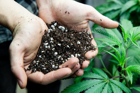 joint: farmers holding rich soil for his marijuana plants
