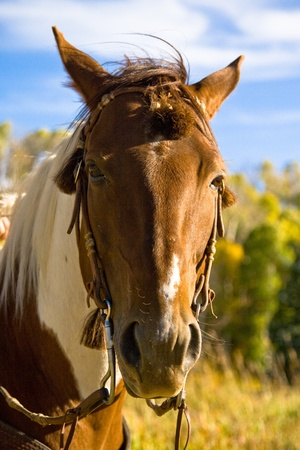 Beautiful Horse on a Ranch