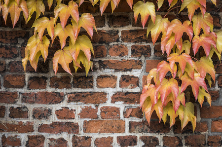 evergreen tree: fall season