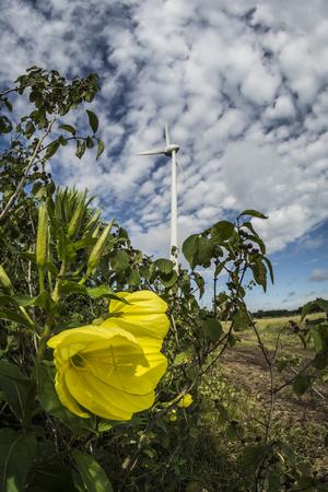 Windmill for power production. Фото со стока