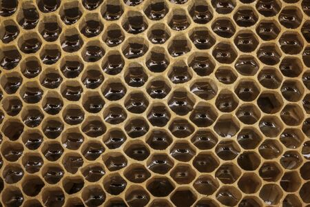 Natural honey structure.