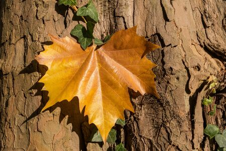 Fall season detail.