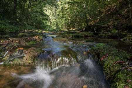 Small river in the forest. Standard-Bild