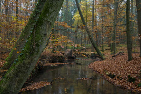 little river in a wood at fall season time