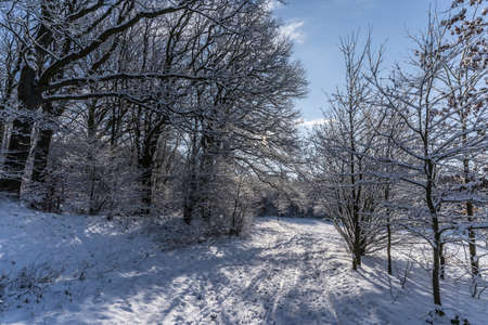 hiking path on a winter morning