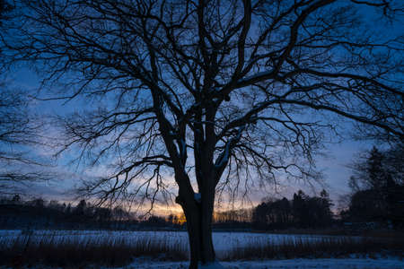 winter lanscape with tree shapes
