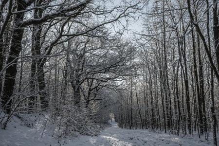 little path in winter landscape