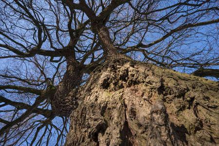 bark structure of an oak tree
