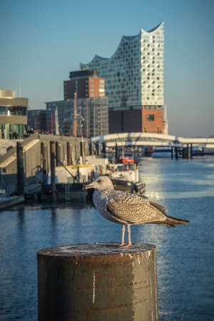 Seagull on a pier in the harbor of Hamburg.