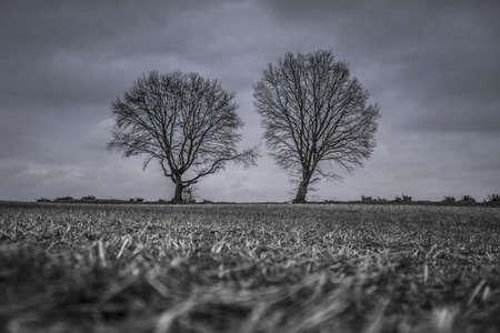 soon tree in winter Standard-Bild