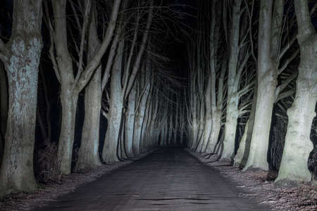 Oak alley in the headlights of a car. Standard-Bild