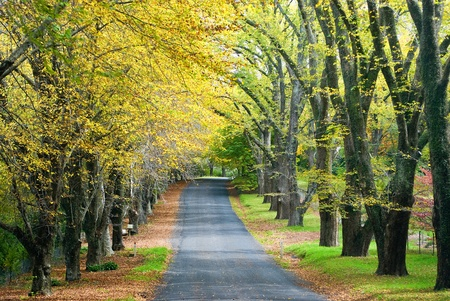Glorious road in autumn with gold colour tree lines
