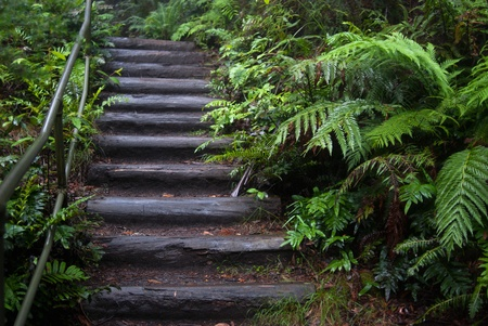 a wet stairway in a tropical rainforest of Blue Mountains, Sydney, Australia