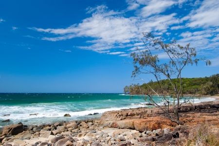 Noosa Beach - Queendsland - Australia blue sky, clear day, a small tropical tree on the rock in the front Stock Photo