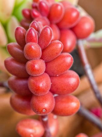 Fresh and juicy Succulent Close-up  Macro shot