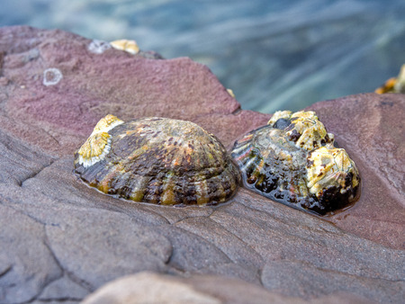 Shells on the rock with water background Stock Photo