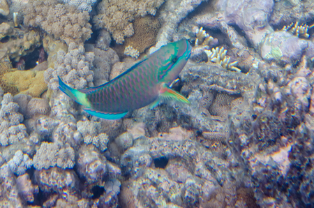 Underwater shot of living coral, colour, fish