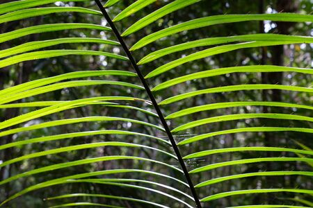 Palm green leaves close up on forest background
