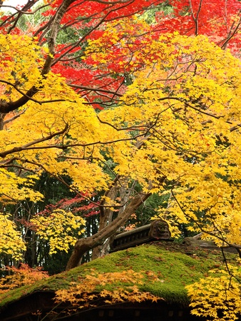 Autumn at Kotoin Sub-temple in Daitoku-ji Temple in Kyoto, Japan Archivio Fotografico