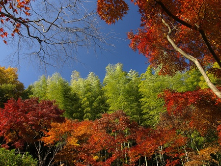 Autumn season at the garden of Tenryu-ji Temple in Kyoto, Japan photo