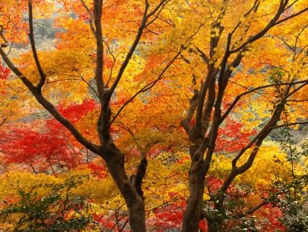 Autumn in Arashiyama, Kyoto, Japan photo
