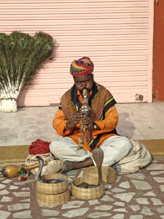Snake charmer plying his instrument to makes snake dancing