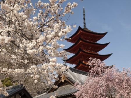 hiroshima: The five storey pagodas in cherry blossom season on miyajima island, hiroshima, japan