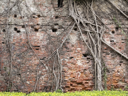 Tree root network on the old brick wall photo